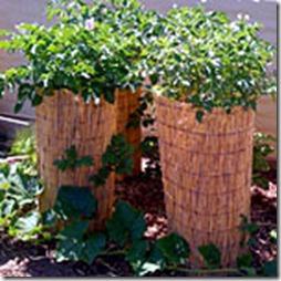 potato-towers-6-s